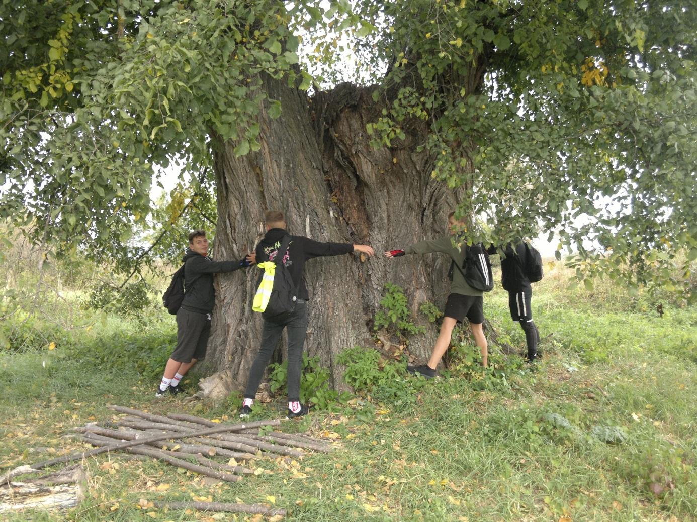 """9. A közel 300 éves Köpeci - szil"""" 7.3 méteres átmérőjű törzse és a diákok"""