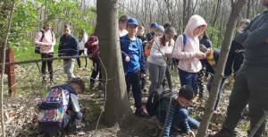 A 4.c osztályos tanulók beszámolója az erdei iskoláról